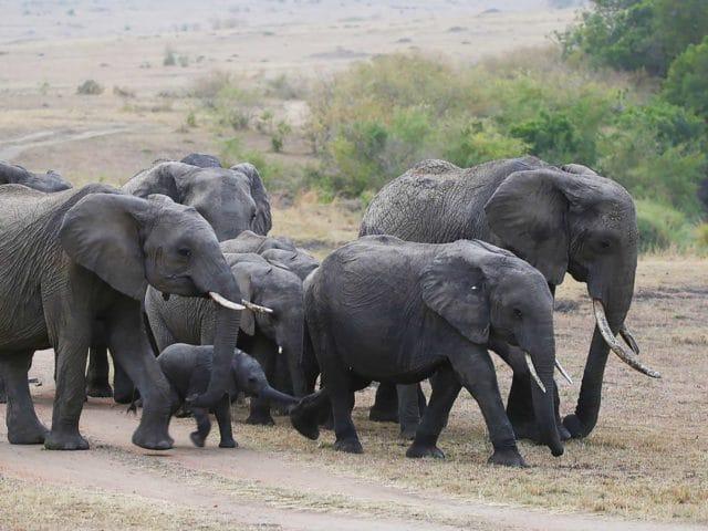https://www.safariventures.com/wp-content/uploads/2019/06/SV3023-640x480.jpg