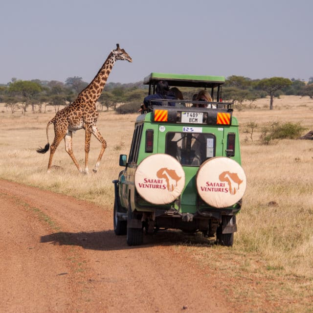giraffe in front of safari vehicle