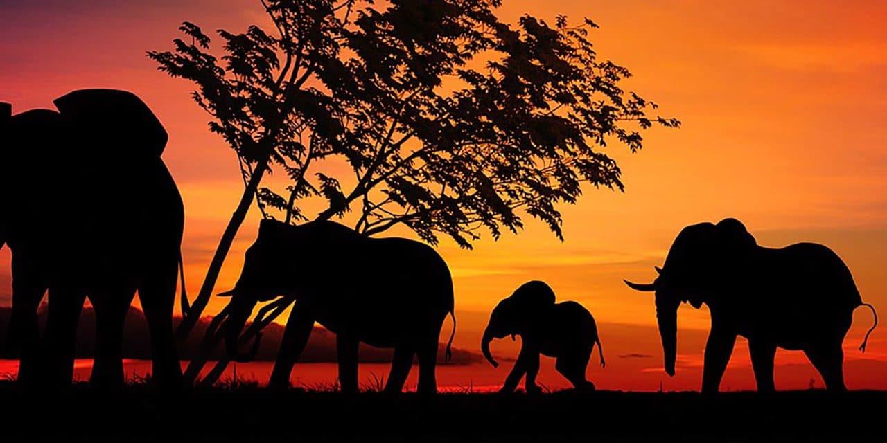 https://www.safariventures.com/wp-content/uploads/2019/07/SV0625-1280x640.jpg