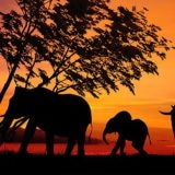 herd of elephants and sunset