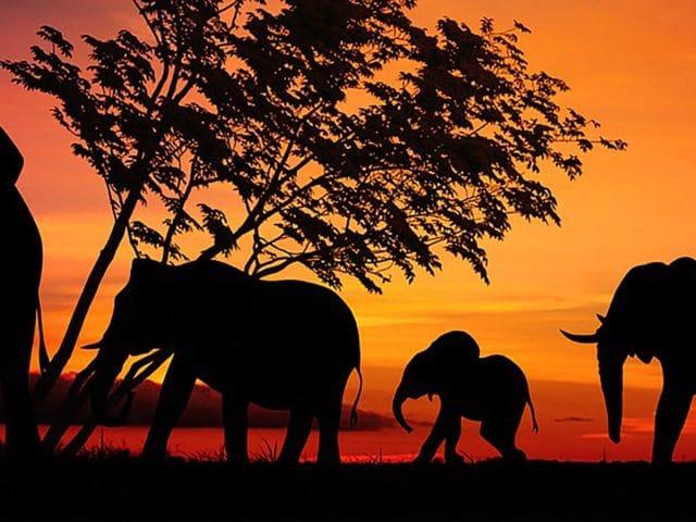 https://www.safariventures.com/wp-content/uploads/2019/07/SV0625-640x480.jpg