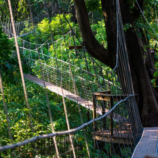 tree tops walkway in Lake Manyara