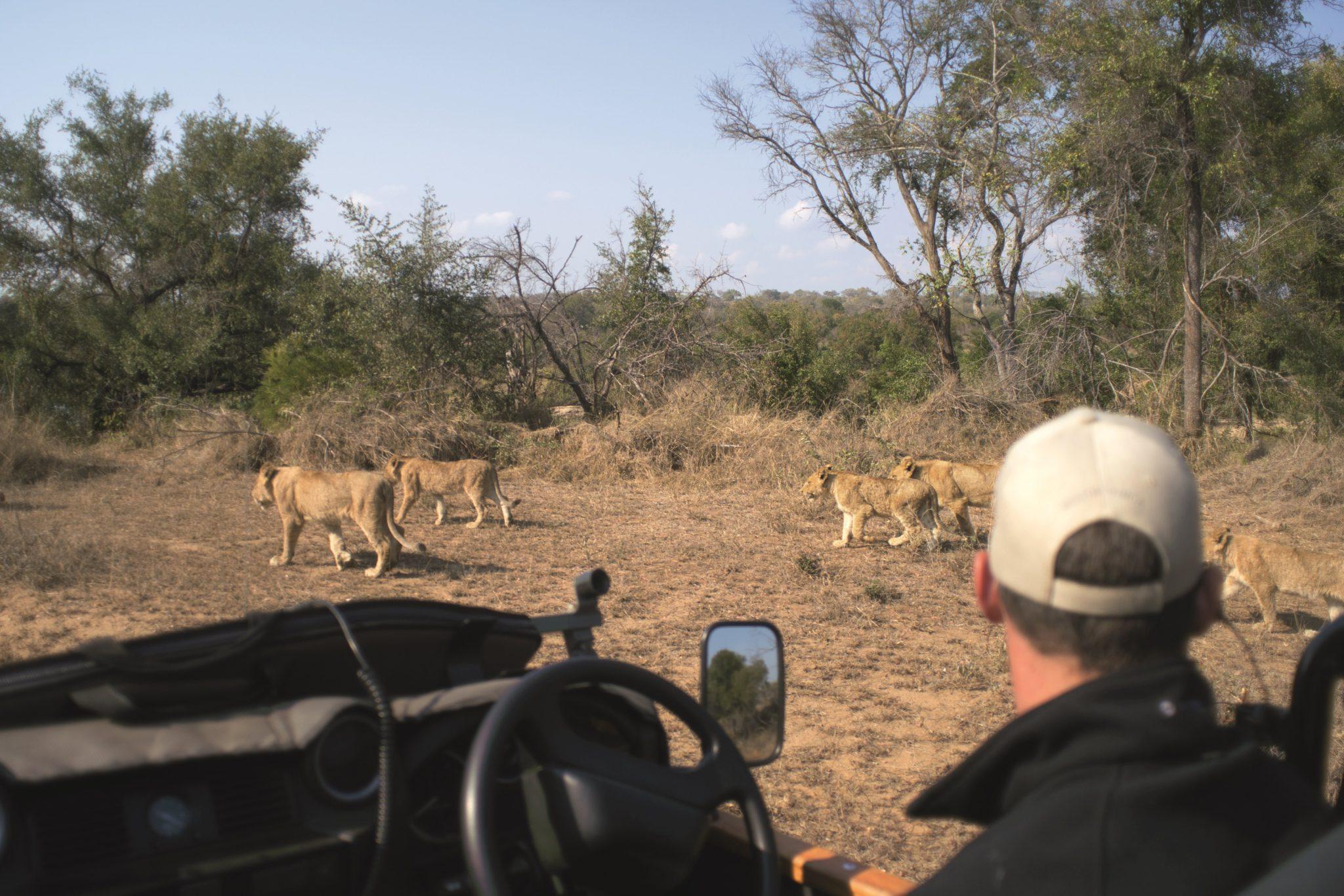 https://www.safariventures.com/wp-content/uploads/2019/11/SV5676.jpg