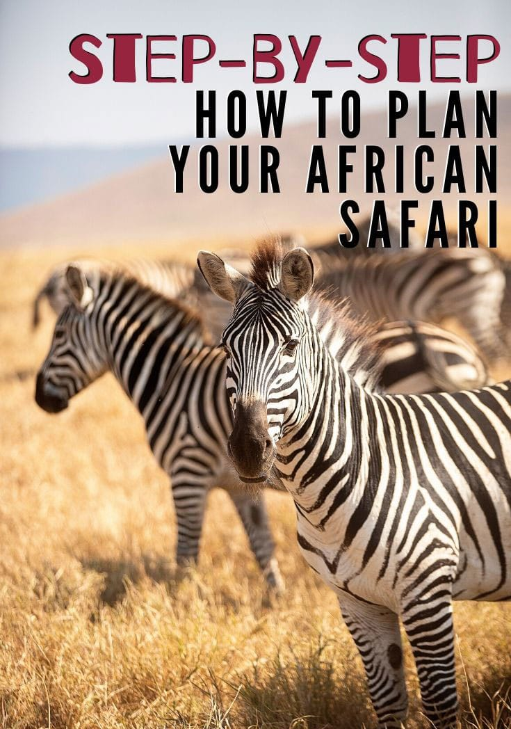 Step by step guide to planning an African safari