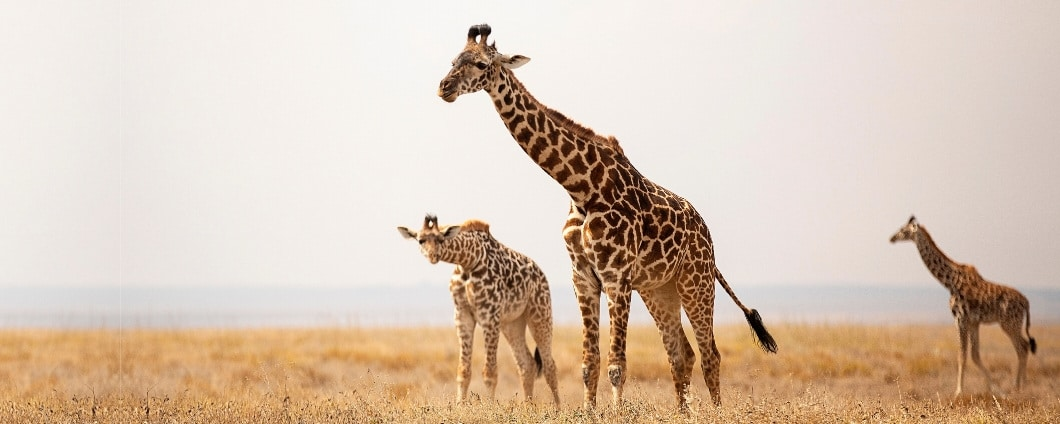 https://www.safariventures.com/wp-content/uploads/Discover-the-Wild-of-1.jpg