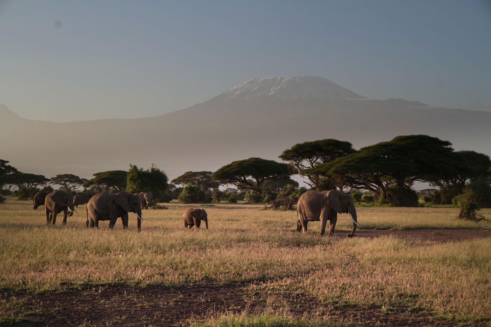 Amboseli National park view