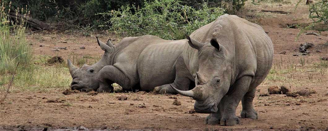 https://www.safariventures.com/wp-content/uploads/rhinoceros-4675919_1920w.jpg