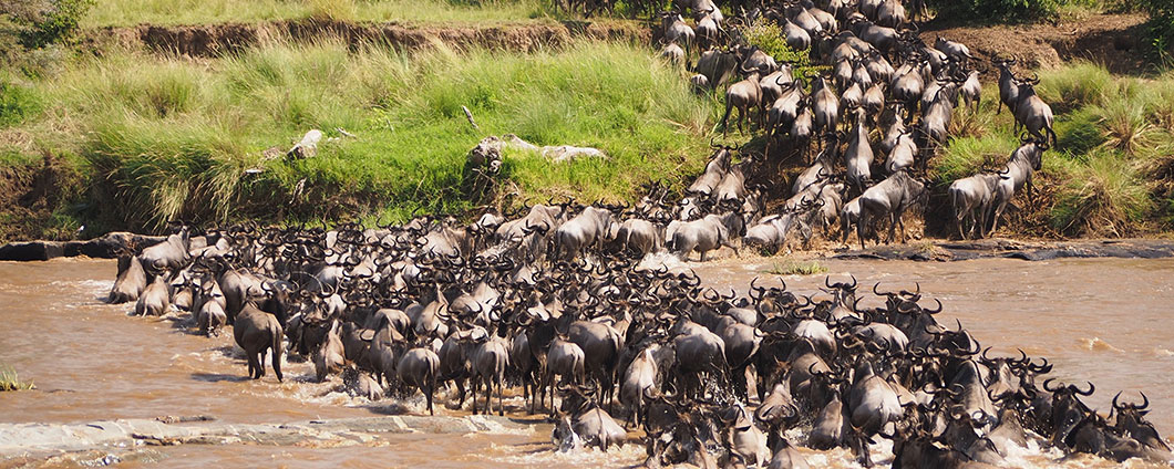 https://www.safariventures.com/wp-content/uploads/wildebeest-river-crossing.jpg